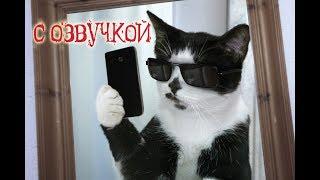 Download Смешные коты с ОЗВУЧКОЙ от Domi Show - Лучшие приколы МЕМЫ Mp3 and Videos