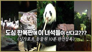 싱가포르 동물원,식물원,아쿠아리움 총정리 / 코끼리부터…