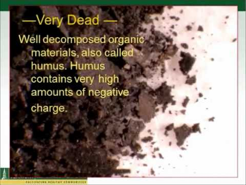 Healthy Soils for Healthy Organic Dairy Farms