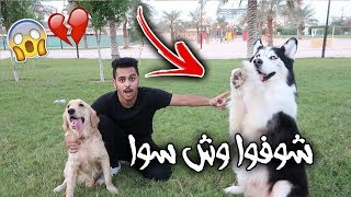 Rocky's Reaction When I Got Him the Smartest Dog in the World!! SHOOK!