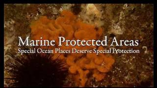 Marine Protected Areas: Special Ocean Places Deserve Special Protection - Part 1 of 2
