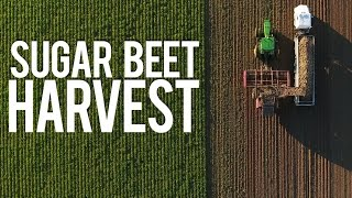 Sugar Beet Harvest 2016 | Ackerman & Son Farms
