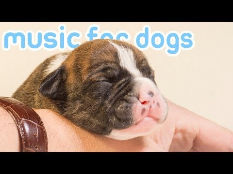 15-hours-of-the-best-music-for-dogs!-chill-your-dog-and-help-sleep!