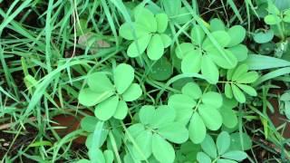 Life Saving Medicinal Plants from Pankaj Oudhia