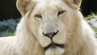ライオンと虎の亜種.