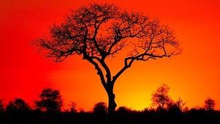 Релакс музыка для подписчика из Зимбабве с любовью и движением