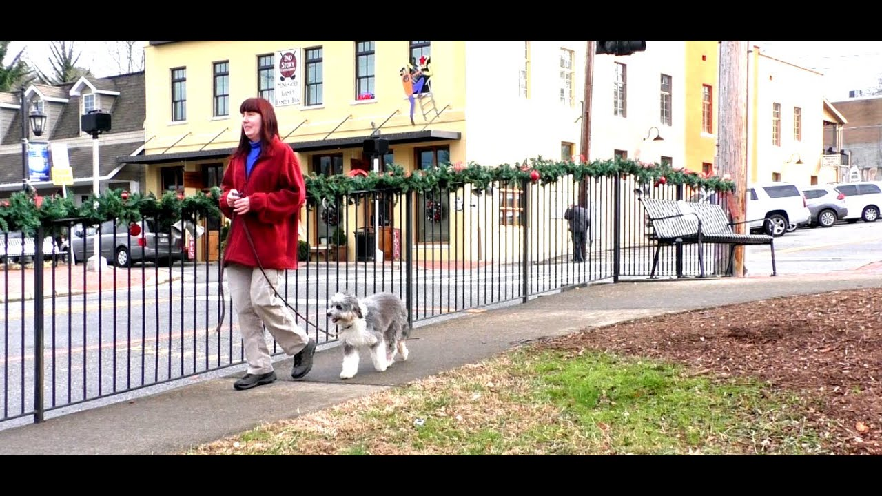 Puppy Training Lacy Aussie Doodle Day 7 Off Leash Recall Heel Sit Blue Ridge Ga