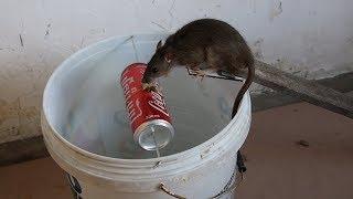 चूहे पकड़ने के 5 कमाल के पिंजरे (घर बैठे बनाइये) || 5 Easy Mouse/Rat Trap