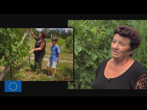 Italie Du Nord : Dur Labour Pour Les Jeunes Agriculteurs