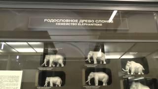 видео Зоологический музей МГУ