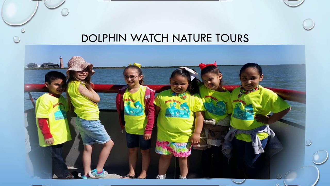 Dolphin Watch Nature Tours In Port Aransas Youtube