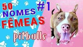 50 Nomes para pitbulls fêmeas #1