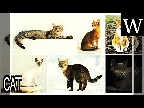 CAT - Documentary
