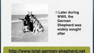 German Shepherd History - German Shepherd Dog History
