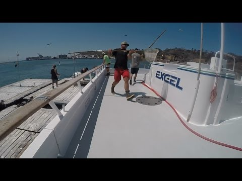 Jackpot Yellowtail & Orcas On The Bow - Excel Sportfishing