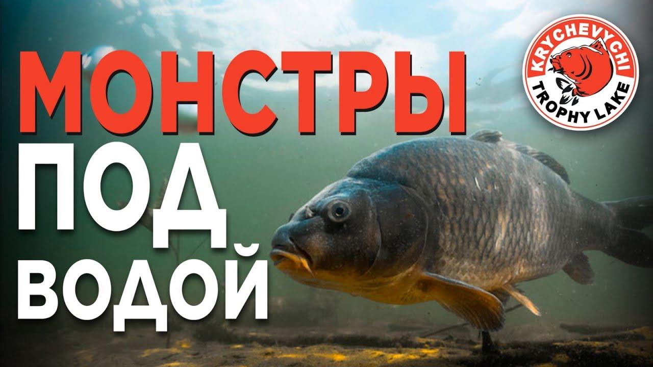 ОГРОМНЫЕ КАРПЫ, подводная сьемка! Часть первая - питание карпа.