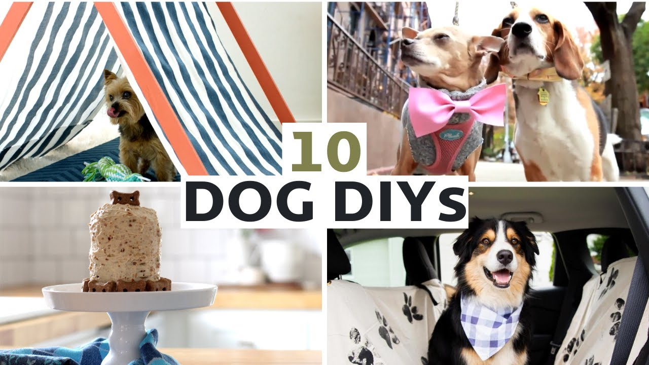 10 DIY Projects For Your Dog