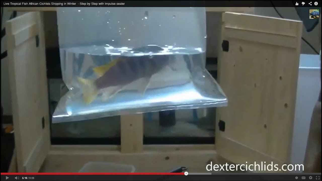 How to ship cichlids and fish in winter with sealed bags for How to ship fish