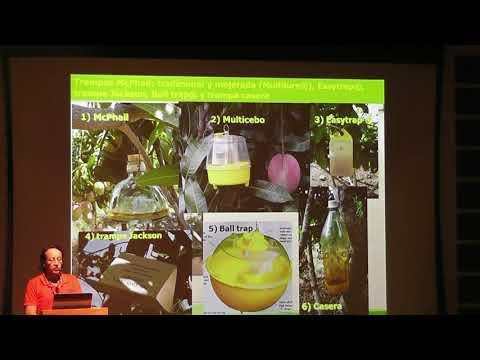 15 Años En Investigación De Manejo En Mosca De Fruta