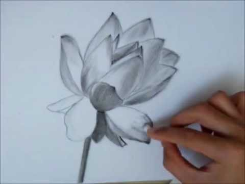 Drawing a lotus flower youtube drawing a lotus flower mightylinksfo