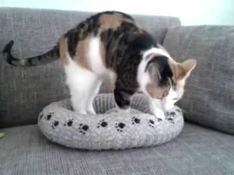 Test Gebreide Kattenmand Youtube