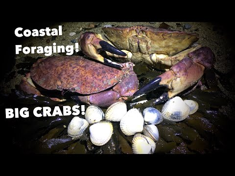 COASTAL FORAGING / Huge Crabs , Foraged Cockles An A Big Cook Up At Home !