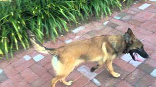 Dog Training Orlando Florida