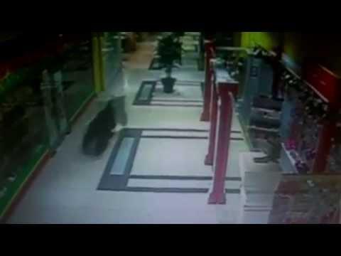 Медведь устроил ночной шопинг в торговом центре Хабаровска