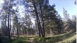 Pinetop / Lakeside AZ April 2015 Exploring local trails