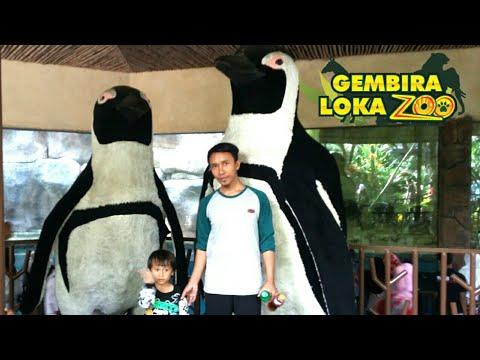 belajar-mengenal-hewan-di-gembira-loka-zoo-yogyakarta-|-belajar-sambil-jalan'-|-video-anak