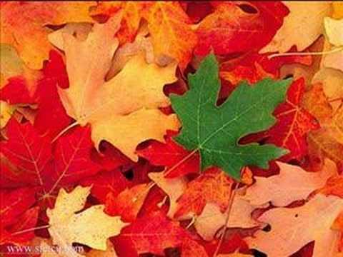 Vivaldi, Autumn [sent 10 times]