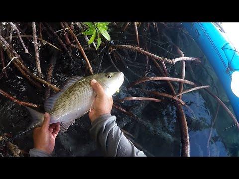 Keys Kayak Fishing - Flippin Pilchards For Mangrove Snapper
