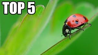TOP 5 - Neuvěřitelných zástupců hmyzu