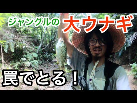 大ウナギ捕獲の罠を仕掛ける!西表島ジャングル