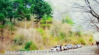 [갤럭시노트10+]벚꽃엔딩-부귀리 물안마을 벚꽃터널 드…