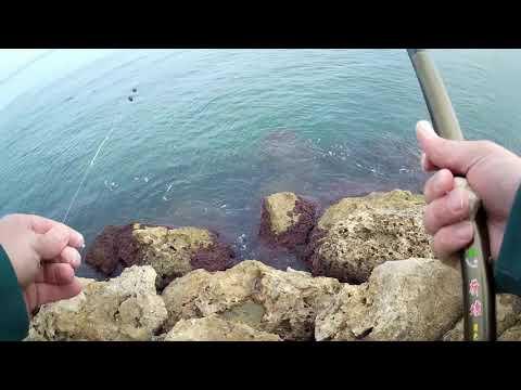 דיג ארסים בים עם חכת בוס הרבה זמן לא דגתי ככה בים מפלצת במרדף מזהים מה זה ?