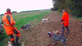Repeat youtube video Battue chevreuils et sangliers 2016_2017