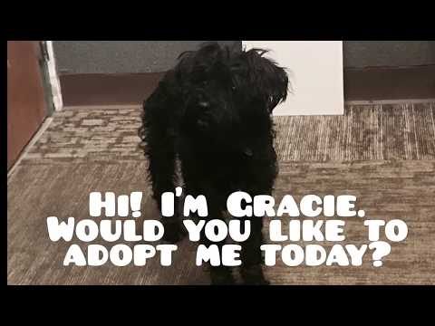 Adorable Poodle Mix Needs A New Home