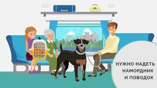 Перевозка Домашних Животных В Поездах по России
