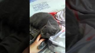 Любовь кота к хозяйке