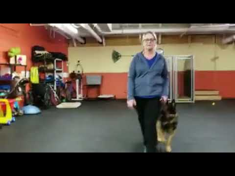Training a Dog to Heel | Walking with a dog in Heel