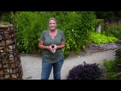 Identifying Plants By Family Characeristics