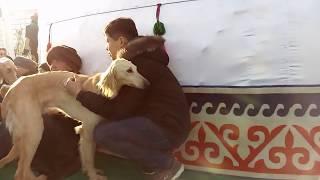 Участие породистых собак в праздновании Наурыз г.Астана 2018 г.