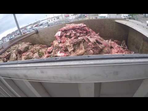 Cow Parts Loaded into a Rendering Truck at the Slaughterhouse