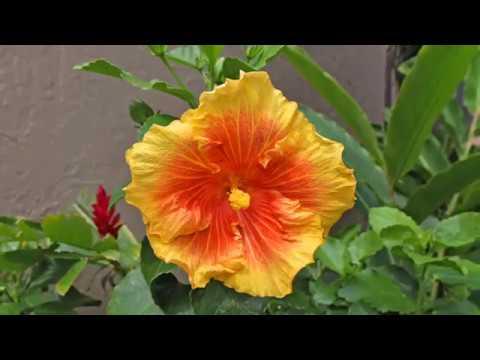 Papakea #A206 - Maui, Hawaii