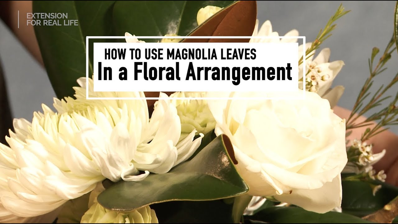 How To Use Magnolia Leaves In A Flower Arrangement Youtube