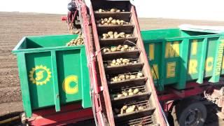 AgroStapar vadjenje krompira
