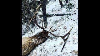 INCREDIBLE solo Elk hunt Idaho - Limitless 26