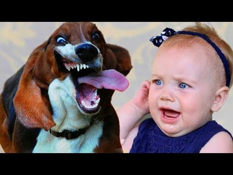 Funny Basset Hound Dog and Adorable Baby Compilation