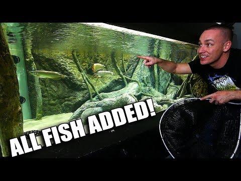 FISH ARE IN THE 2,000G AQUARIUM!!!